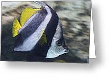 The Bannerfish Greeting Card