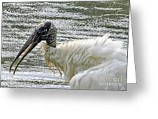 The Bathing Wood Stork 2 Greeting Card