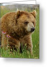 The Bear 1 Dry Brushed Greeting Card