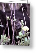 The Bearcub And The Dandelion Greeting Card