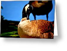 The Beautiful Duck Greeting Card
