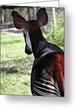 The Beautiful Okapi 02 Greeting Card