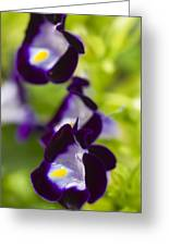 What's Wrong With Being A Pansy? Greeting Card