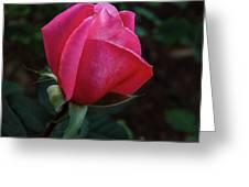 The Beautiful Rose Bud Greeting Card