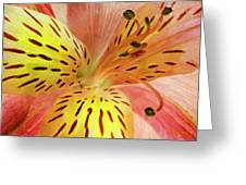 The Beauty Inside Greeting Card
