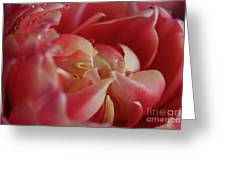 The Beauty Inside Greeting Card by Tracy Hall