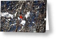 The Beauty Of A Cardinal Greeting Card