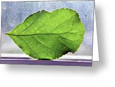 The Beauty Of A Leaf Greeting Card