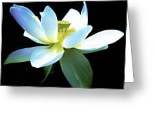 The Beauty Of A Lotus Greeting Card