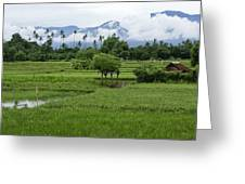 The Beauty Of Bali Greeting Card