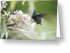 The Beauty Of Butterflies  Greeting Card