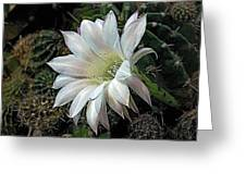 The Beauty Of Cactus Greeting Card