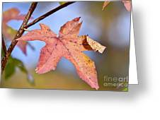 The Beauty Of Fall Greeting Card