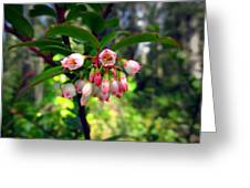 The Beauty Of Spring Greeting Card