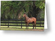 The Beauty Of The Thoroughbred Greeting Card