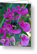 The Bee And The Flowers Greeting Card