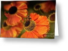 The Bee And The Helenium Greeting Card