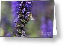 The Bee Hover Greeting Card