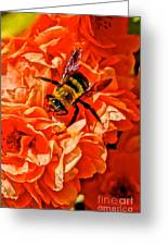 The Bee And The Flower Greeting Card