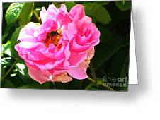 The Bee In The Rose Greeting Card