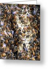 The Bees Hive It Greeting Card