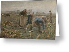 The Beet Harvest Greeting Card