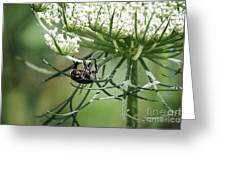 The Beetle Acrobat Greeting Card