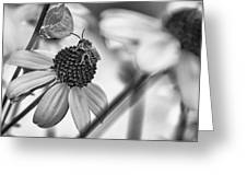The Best Gardener - Bw Greeting Card