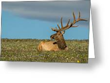 The Big Guy Resting Greeting Card