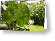 The Big Leaf Greeting Card