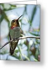 The Bird In The Foil Mask -- Anna's Hummingbird In Templeton, California Greeting Card