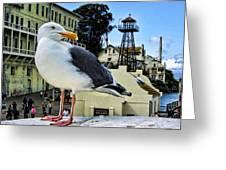 The Bird Of Alcatraz Greeting Card