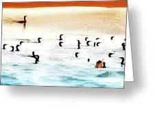 The Birds Santa Rosa Island Greeting Card