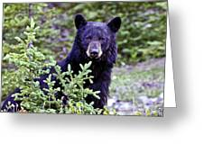 The Black Bear Stare Greeting Card