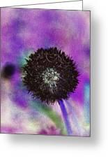 The Black Dandolion Greeting Card