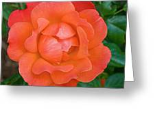 The Bloom Greeting Card