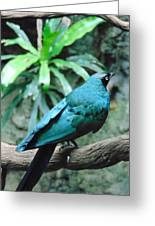 The Blue Bird Greeting Card