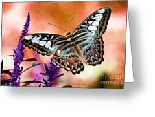 The Blue Clipper Greeting Card by Lois Bryan