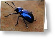 The Blue Metallic Bug  Greeting Card