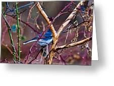The Blue Of Winter In The Woods Greeting Card