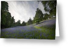 The Bluebells Greeting Card