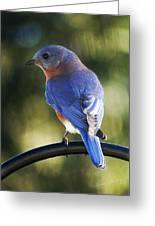 The Bluebird Greeting Card