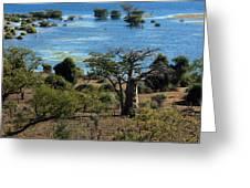 The Boabob Tree Greeting Card