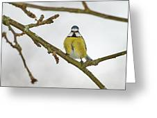 The Bold One. Eurasian Blue Tit Greeting Card