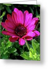 The Botanical Garden Zagreb Floral #9 Greeting Card