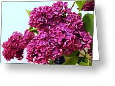 The Branch Of A Purple Lilac Greeting Card