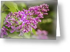 The Branch Of Lilac Greeting Card
