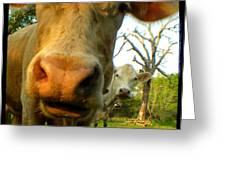 The Breeland Herd Greeting Card