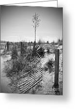 The Broken Fence Greeting Card