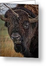 The Buffalo 2 Greeting Card
